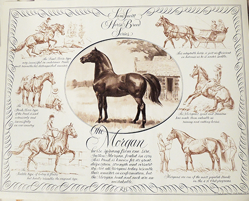 The Morgan Horse in Portrait & Action