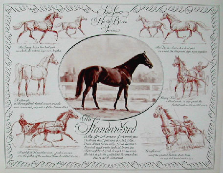 The Standardbred Horse in Portrait & Action